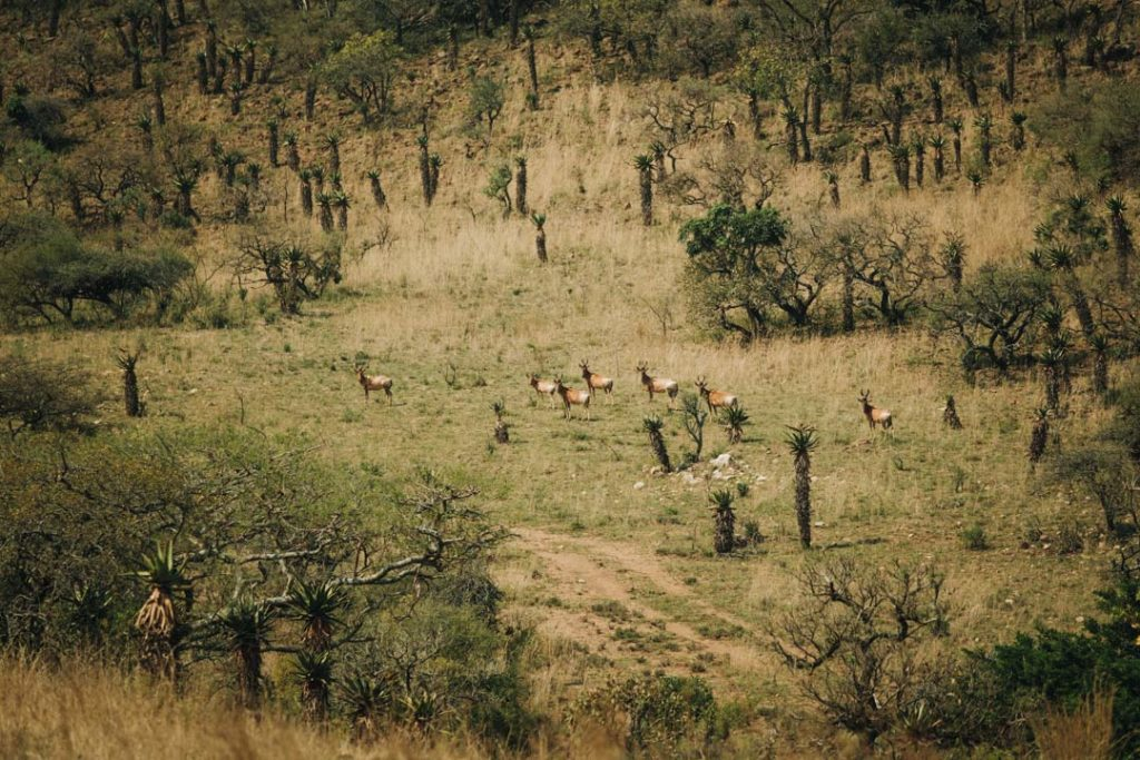 babanango game reserve wildlife